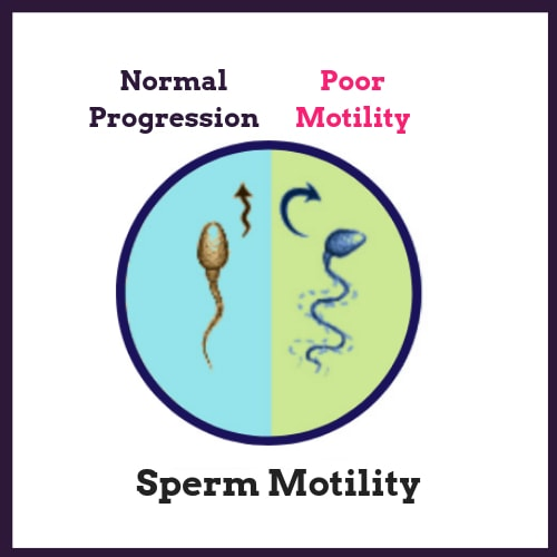 Normal sperm count needed to fertilize